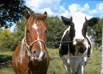 Livestock Feed Sebastopol