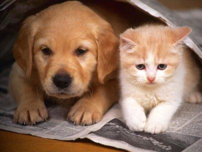 Dog Food & Cat Food Sebatopol